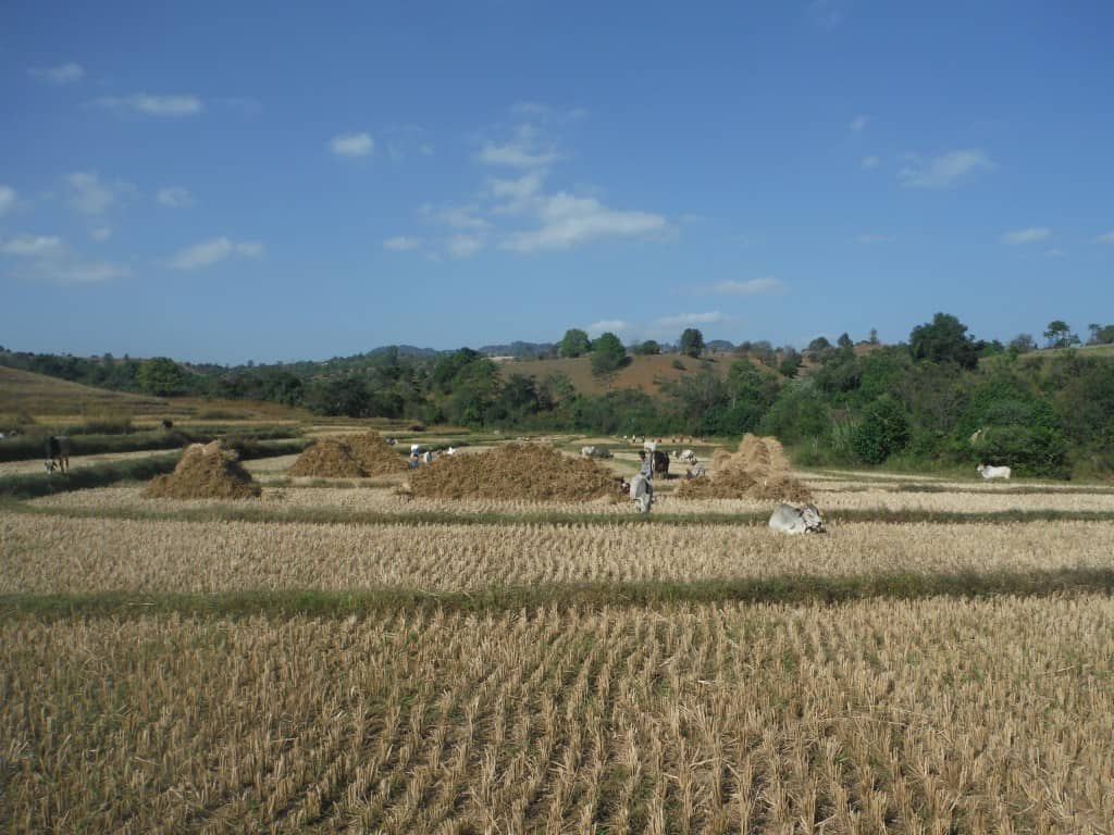 Men working in the fields.