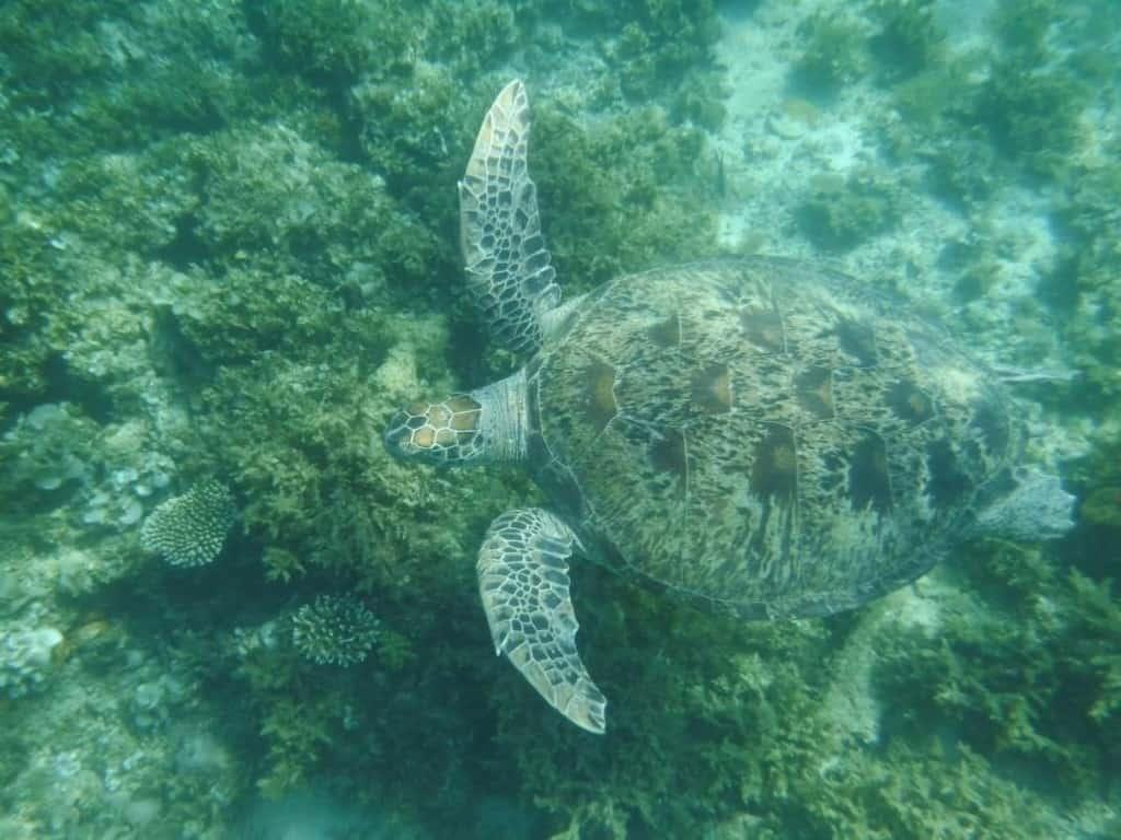 island hopping boat trip port barton turtle