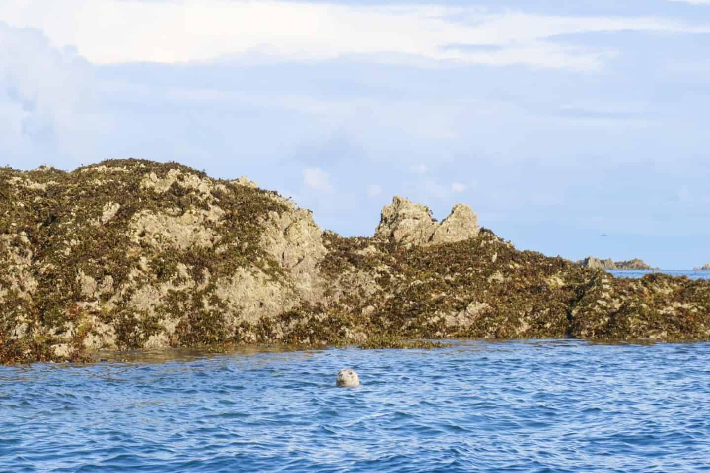 Jersey British Isles weekend guide boat trip seal
