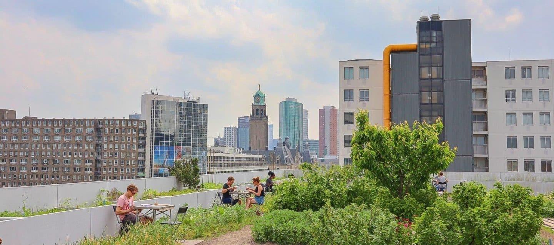Vegan Friendly Cafes & Restaurants To Visit in Rotterdam!