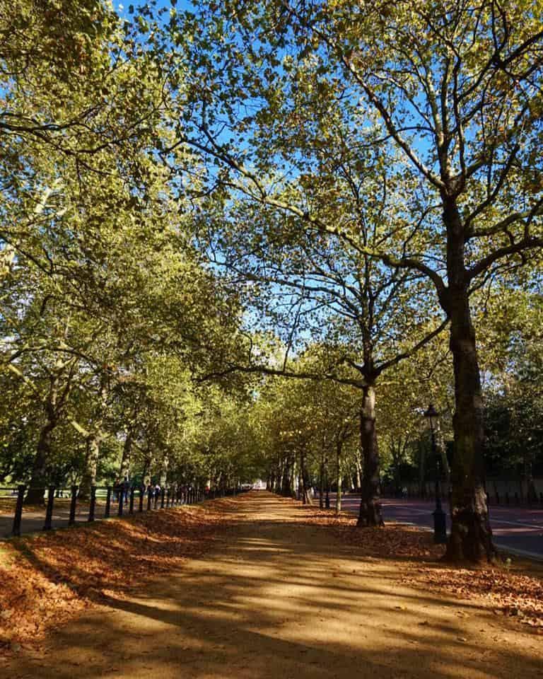 Green Park in Autumn